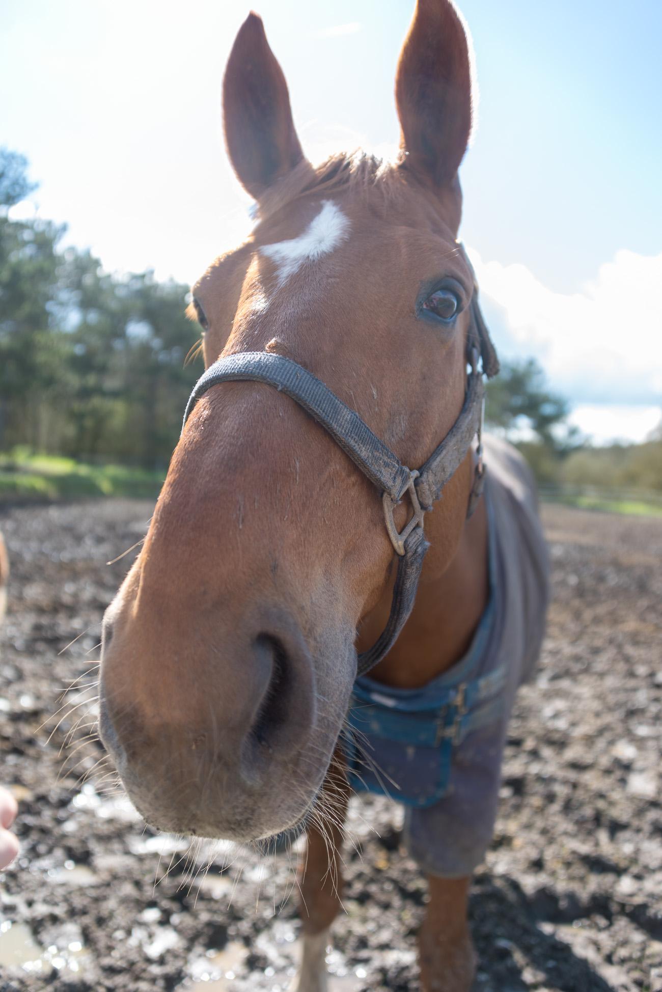 Freund Pferd